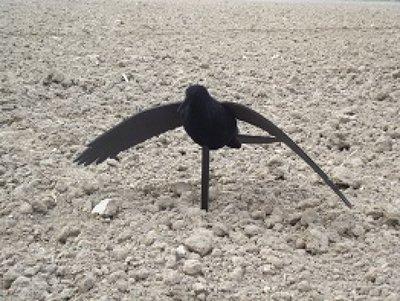 Beflockte vliegende kraai