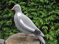 Beflockte volle duif met pin